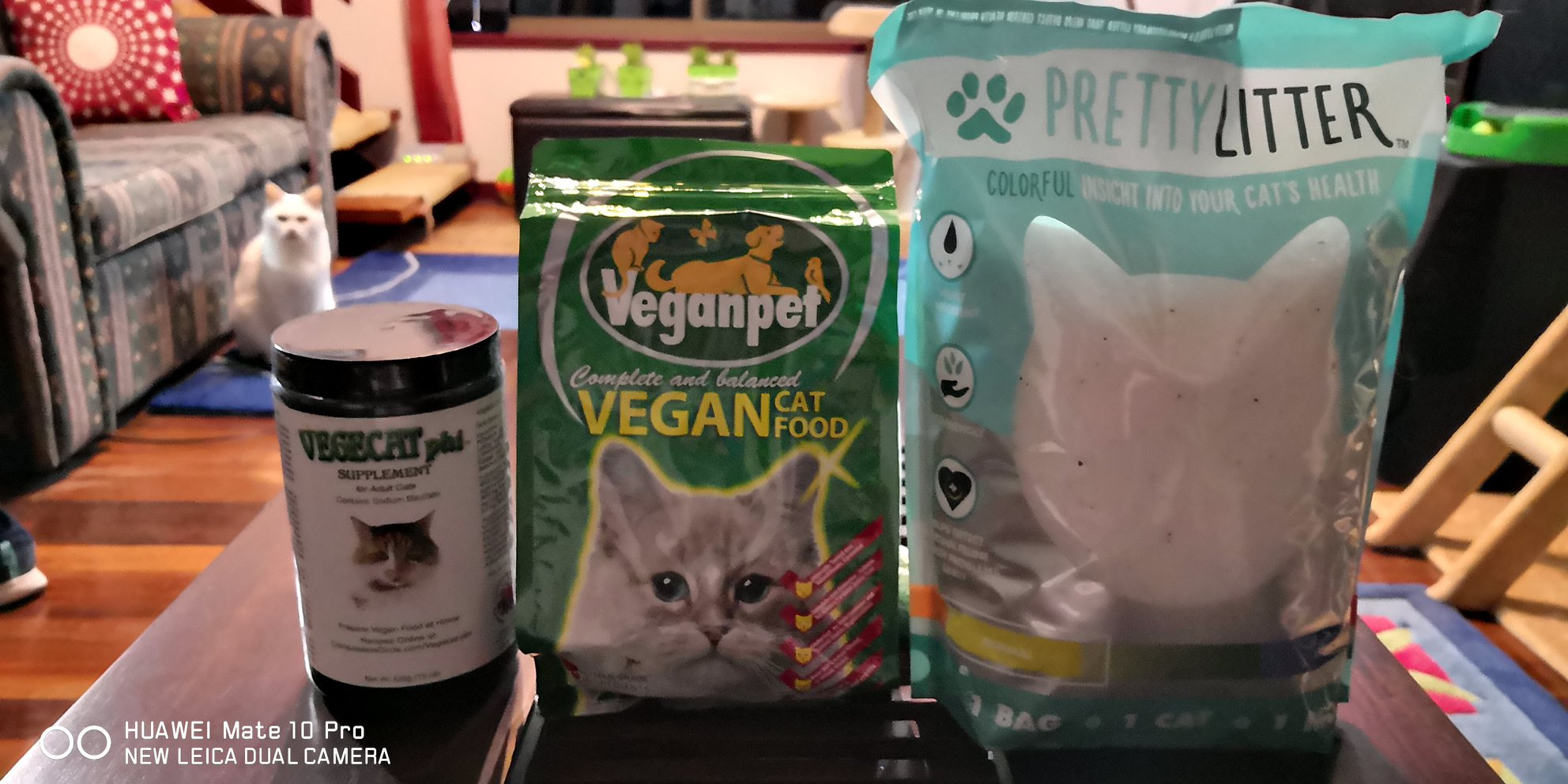 Welcome To Vegan Informationcom Urma The Vegan Cat