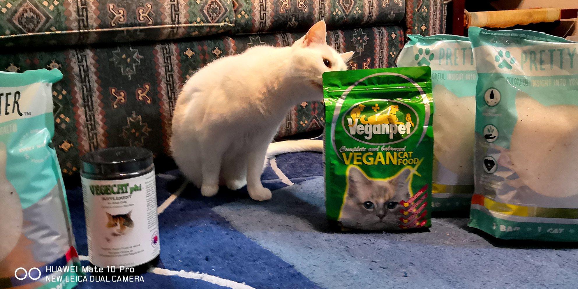 Welcome To Vegan Informationcom Urma The Vegan Cat